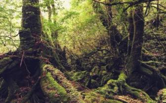 寻找幽灵公主的秘密森林 探秘日本屋久岛