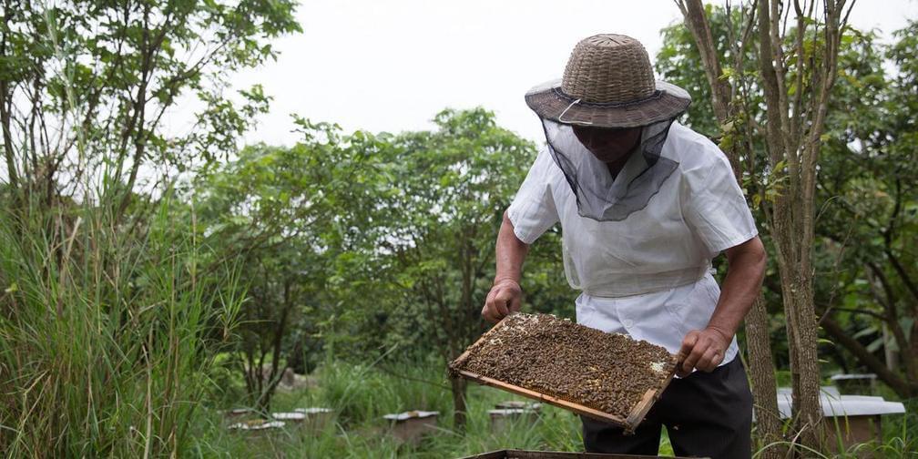 城事5.30特刊:蜜蜂守护者
