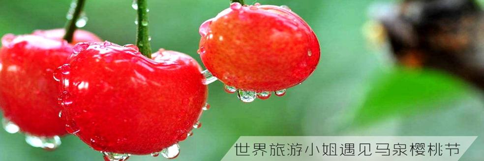 世界旅游小姐遇见马泉樱桃节