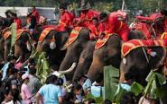 """泰国举办""""大象日""""活动"""