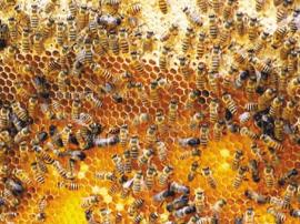 卢氏县举办中蜂养殖扶贫产业冬季培训班