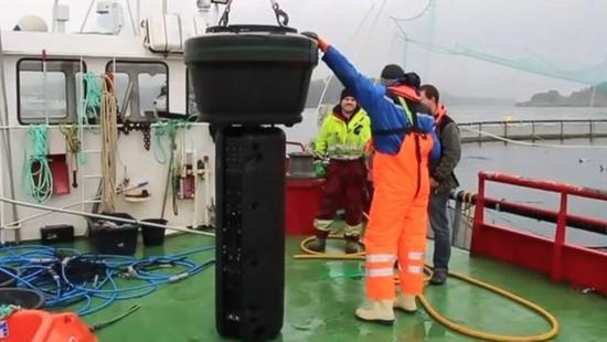 渔业养殖也用上高科技 鲑鱼可享受激光除海虱服务