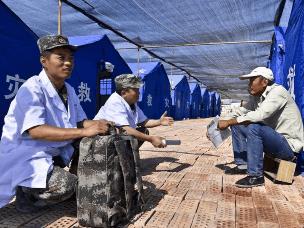 新疆精河县震后重建工作有序展开