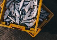 你吃的海鲜是野生的吗?区块链或能帮你追踪
