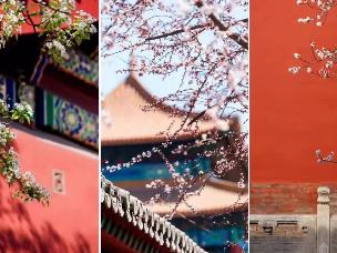 冬日故宫拍照指南 大气美你也可以拥有!