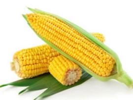 玉米营养那么好 哪种吃法最适合你?