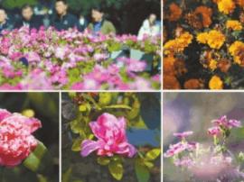 冬日星城花正艳 长沙城区常年绿色四季花开