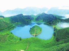 湖北省春季采茶最佳路线公布 宜昌市5处茶园上榜