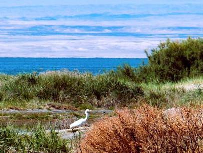 乌伦古湖湿地公园被列为国家级湿地公园
