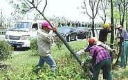大风刮倒千棵树 林业部门紧急组织抢救