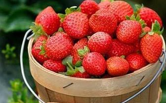 """和营养师学学吃""""冬草莓"""""""