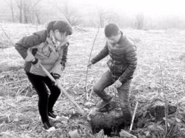 灵宝市苏村乡卫家磨村:栽植果树助力脱贫