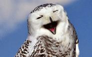 看看动物们憨态可掬的笑容