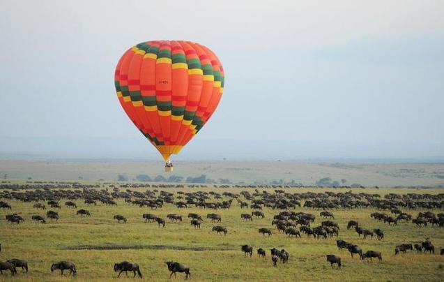 肯尼亚追寻动物踪影