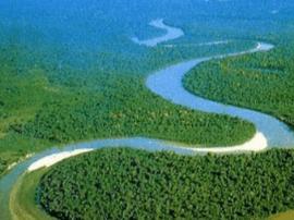 亚马逊雨林或曾被海洋淹过两次 促进新物种进化