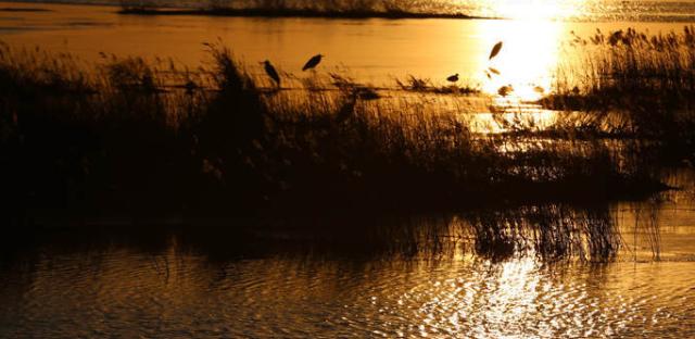 """航拍""""候鸟天堂""""北大港湿地"""