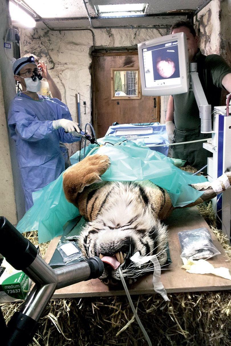 长颈鹿、狼蛛、狒狒...他靠手术拯救数以万计动物