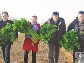 夏县大力发展设施大棚农业助农增收