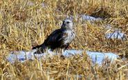 中国最北湿地迎首批候鸟
