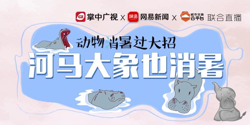 动物消暑过大招:河马大象如何度过广州夏天?