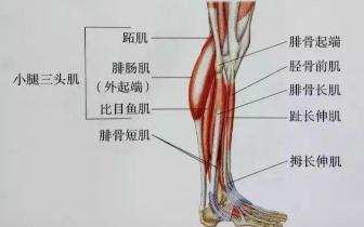 肌肉紧张显小腿粗 小腿拉伸图解告别疙瘩腿
