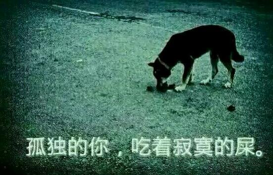 轻松一刻3月6日:为何单身不应养宠物?知道真相的我哭了