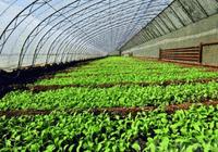 有机农业能不能养活90亿人?减少浪费和肉就可行