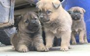 市民捡到五只小狗 期盼好心人领养