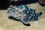 一条鲜美海鳗毒倒一家大小 咋回事?