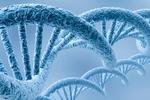 英国发现40个基因参与骨髓瘤发展