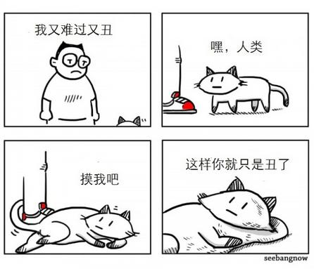 你们养狗,我打算养猫了
