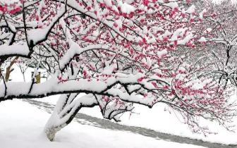 冰雪世界里那点红 是在唤醒济南的春天