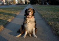 """说好的""""人类永远的好朋友""""呢?为啥有的狗变得很"""