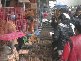 预防禽流感!广州今起禽类市场连续休市三天
