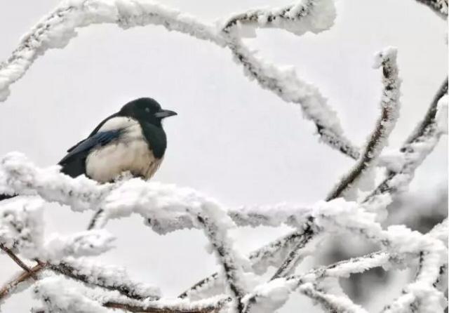 重庆奉节的高山雪景如诗如画若仙境