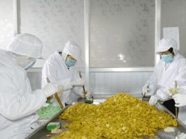 东明昌磊食品:用现代科技改造传统豆制品加工业