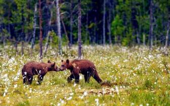 步步惊心!7条美爆全球的森林步道惊艳春光