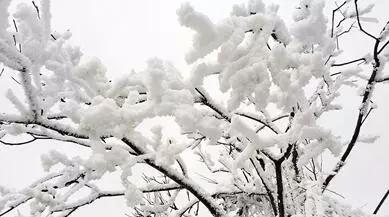 重庆又双叒叕下雪啦!这份最新赏雪地图快来收藏