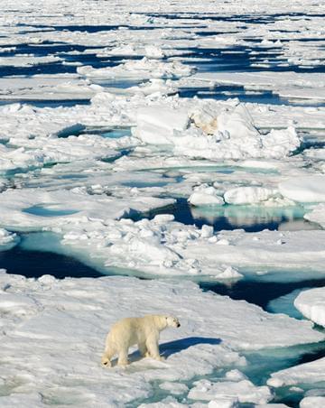 科学家研究北极:最难的是抵达和坚守