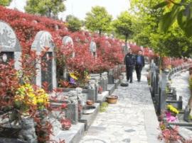 清明节祭祀变迁:时髦祭品热销 代客扫墓惹争议