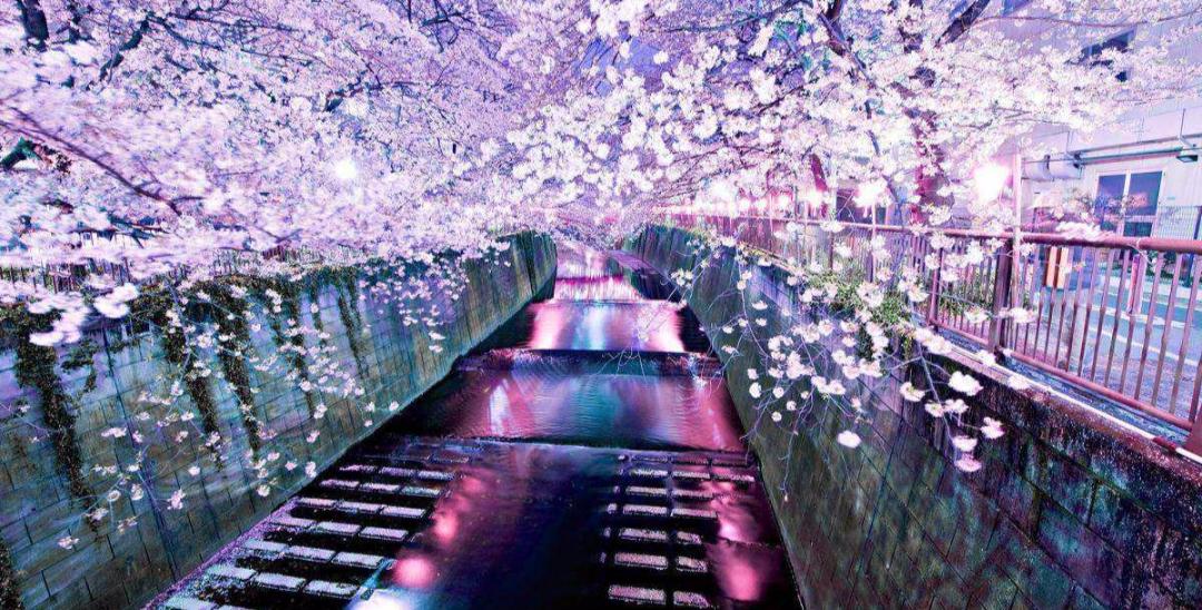6条日本最美樱花路线,寻找被春天临幸的感觉