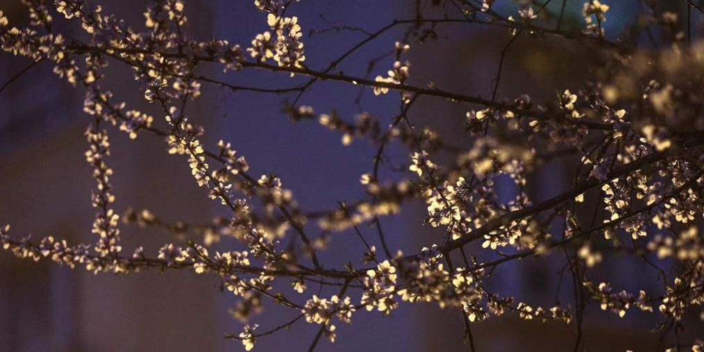 乌鲁木齐市:入夜雨雪至 黎明了无痕