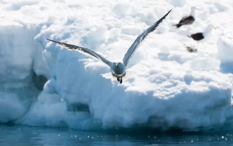 世界尽头 无人居住的南极是什么样的?