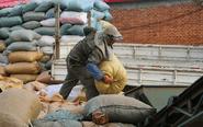 农民每天搬运4万斤花生 挣钱让孩子离开农村