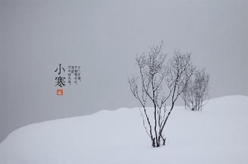 雪花片拼小树步骤图片大全