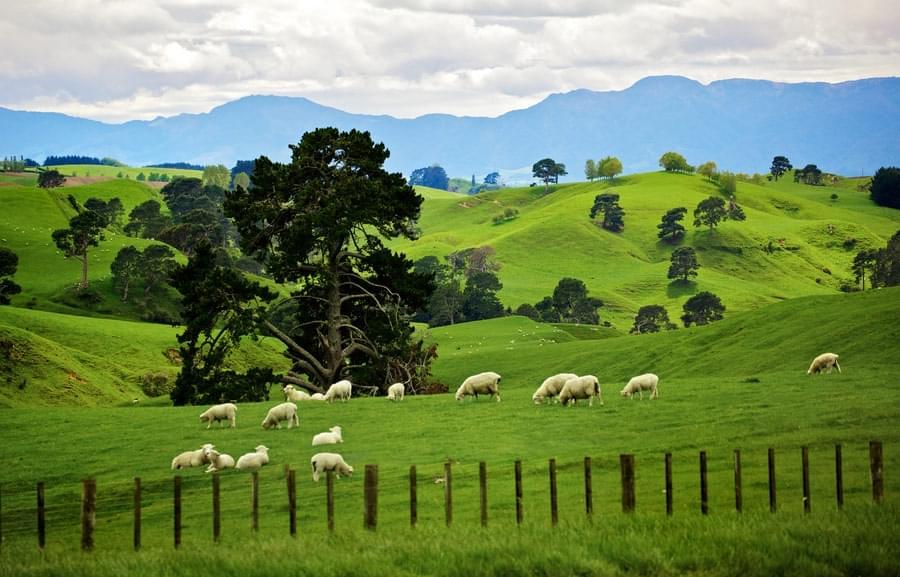 新西兰移民新政被吐槽 太过重视学历