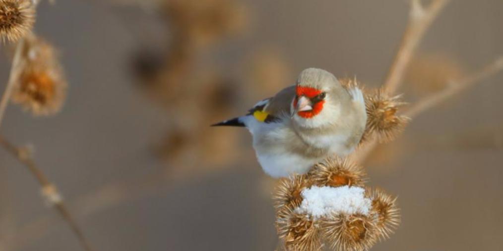 哈巴河县:鸟鸣报春归