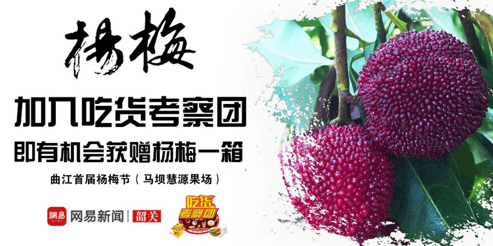 曲江首届杨梅节6月3日开幕,杨梅免费送!