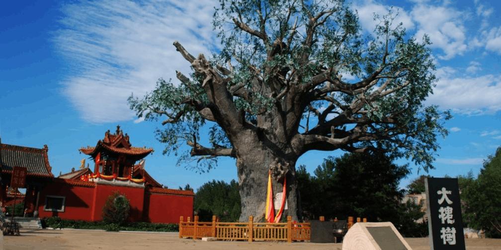 5·19中国旅游日大槐树景区门票享半价优惠