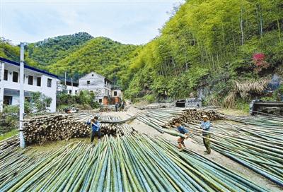 杭州余杭百丈绿色产业发展势头强劲